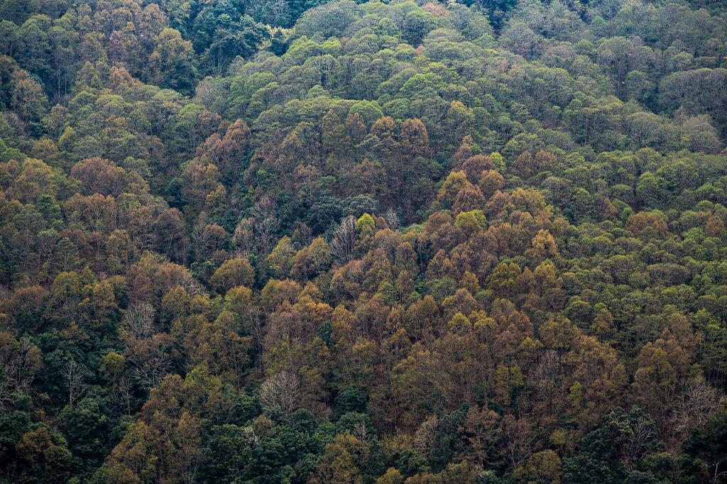 Wald, Bhutan ∙ Forest, Bhutan