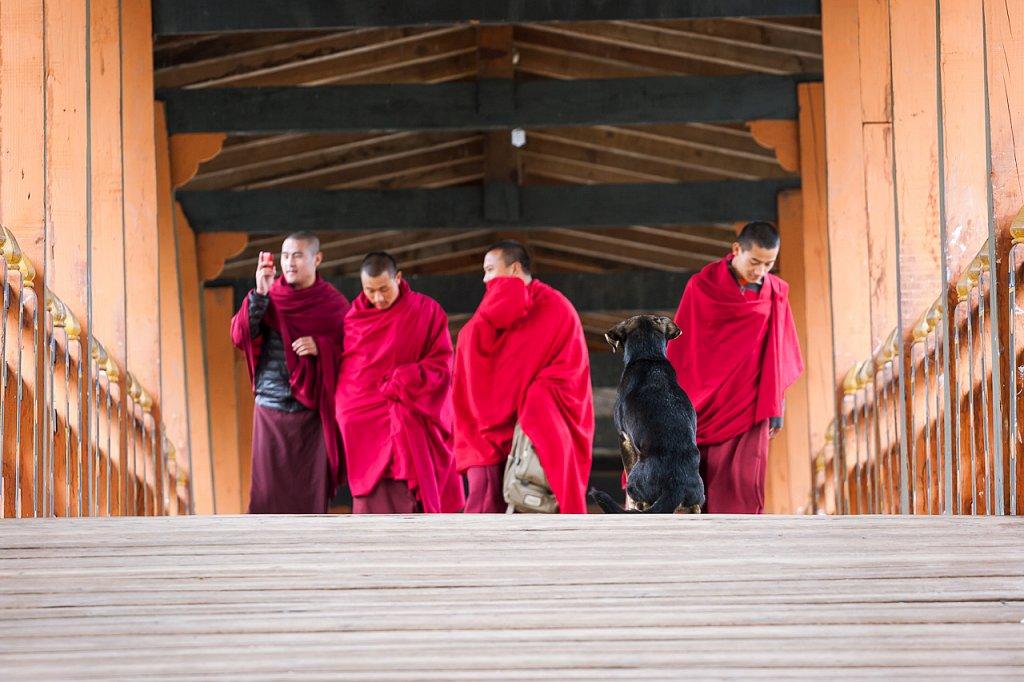 Mönche ∙ Monks, Punakha Dzong, Bhutan